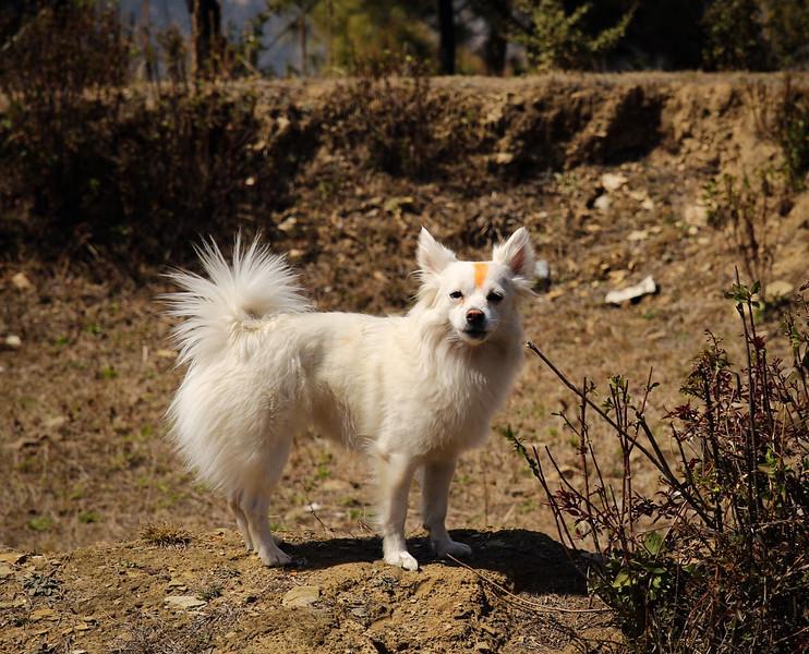Dog On Trail During Holi