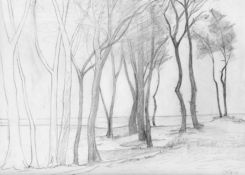 "Tree Series: ""Party Trees"" pencil on paper 8"" x10"""