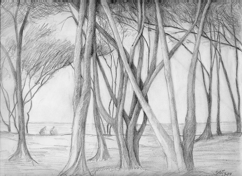 "Tree Series: ""Trees at Waimanalo Bay"" pencil on paper 8"" x 10"""