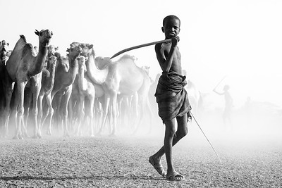 The herder