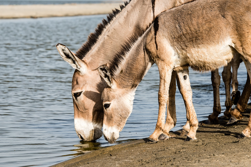 You can lead a donkey to water!