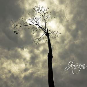 Jasryn01