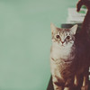Scout-cat