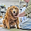 2013-05-18 All Creatures Veterinary Hospital : 40 Images from 5-18-2013