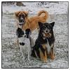 2015-01-06 Snow Dogs : 16 Photos