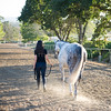 0168_Churchill Equestrian