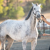 0236_Churchill Equestrian