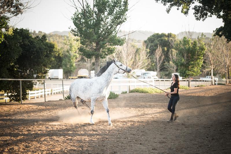 0259_Churchill Equestrian