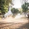 0261_Churchill Equestrian