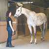 0103_Churchill Equestrian