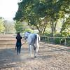 0169_Churchill Equestrian