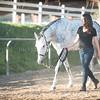 0178_Churchill Equestrian