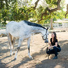 0167_Churchill Equestrian