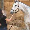 0017_Churchill Equestrian