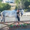 0195_Churchill Equestrian