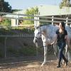 0179_Churchill Equestrian