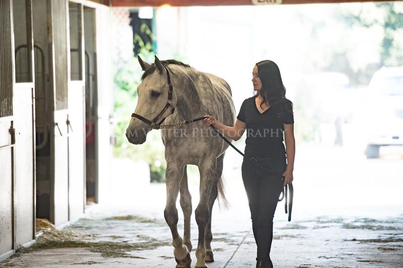 0092_Churchill Equestrian
