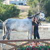 0192_Churchill Equestrian