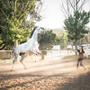0262_Churchill Equestrian