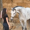 0018_Churchill Equestrian
