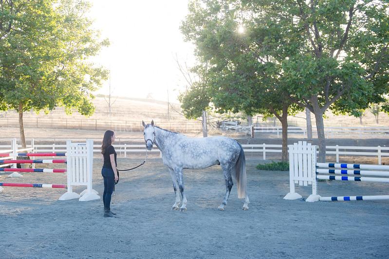0242_Churchill Equestrian