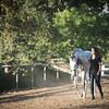 0176_Churchill Equestrian