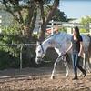 0180_Churchill Equestrian