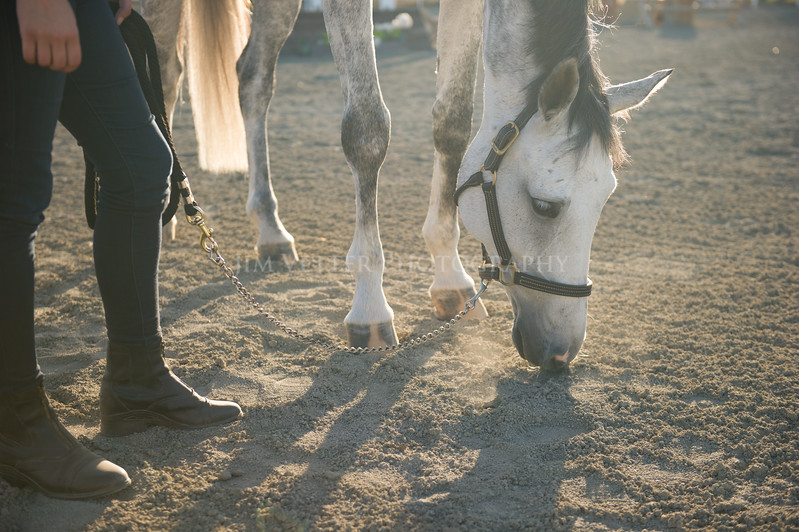 0202_Churchill Equestrian
