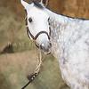 0001_Churchill Equestrian