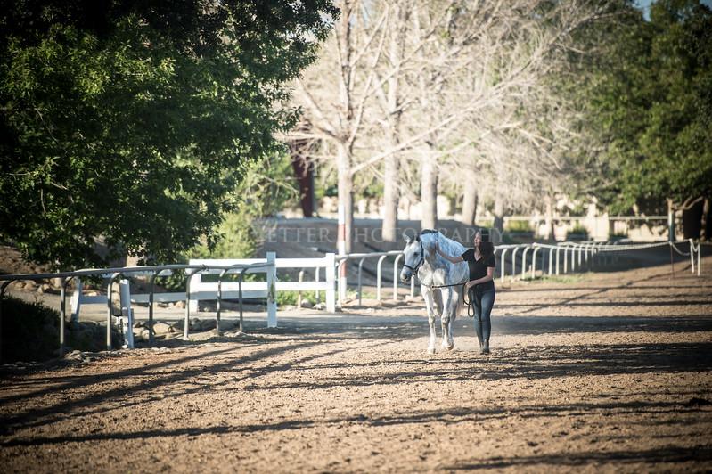 0175_Churchill Equestrian