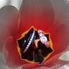 IMG_0394bwr