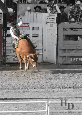Bull snorts dust at the Pendelton Roundup. Let'er buck.
