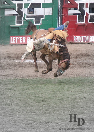 The fall. Cowboy tumbles of a bronco during the Pendelton Roundup, oregon.