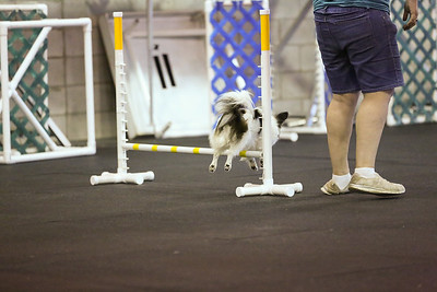 dogs_06142016-44