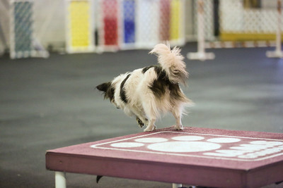 dogs_06142016-40