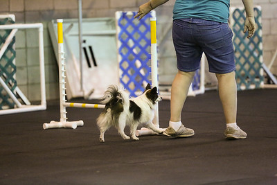dogs_06142016-43