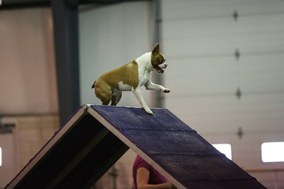 dogs_06142016-26