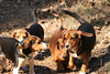 Crisco, Streak, Max and Popeye doing what they do best. Goofing off.....