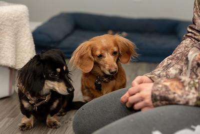 Animal Rescue Home