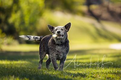 TGBB_Dog_Photography_Alurkoff-0004