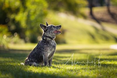 TGBB_Dog_Photography_Alurkoff-0003