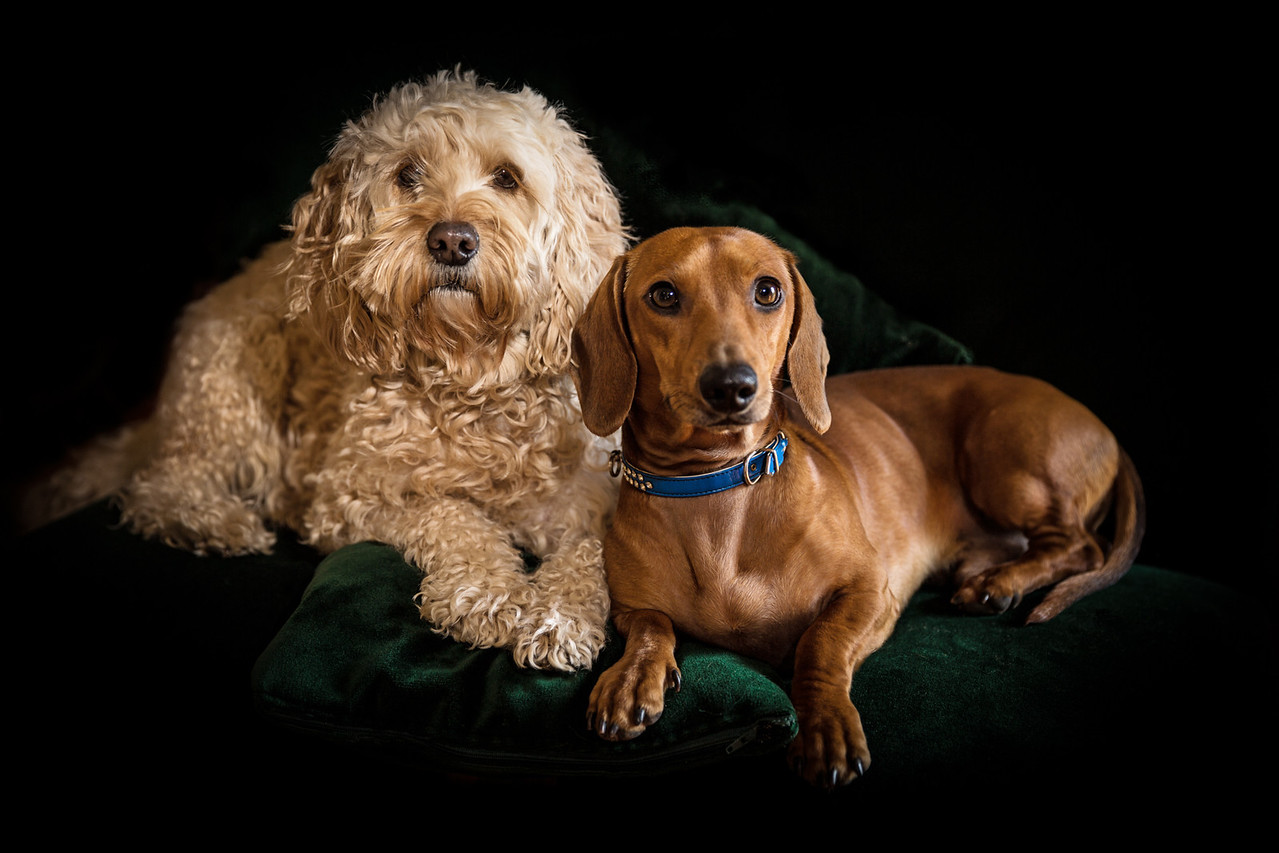 Ollie & Ugo.