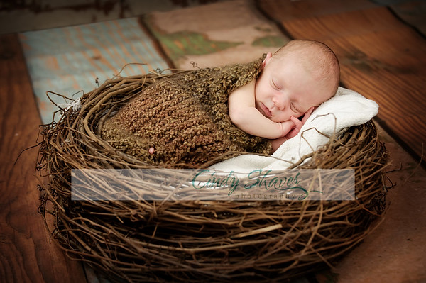 Todd by Huntsville Newborn Photographer