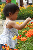flowershow2