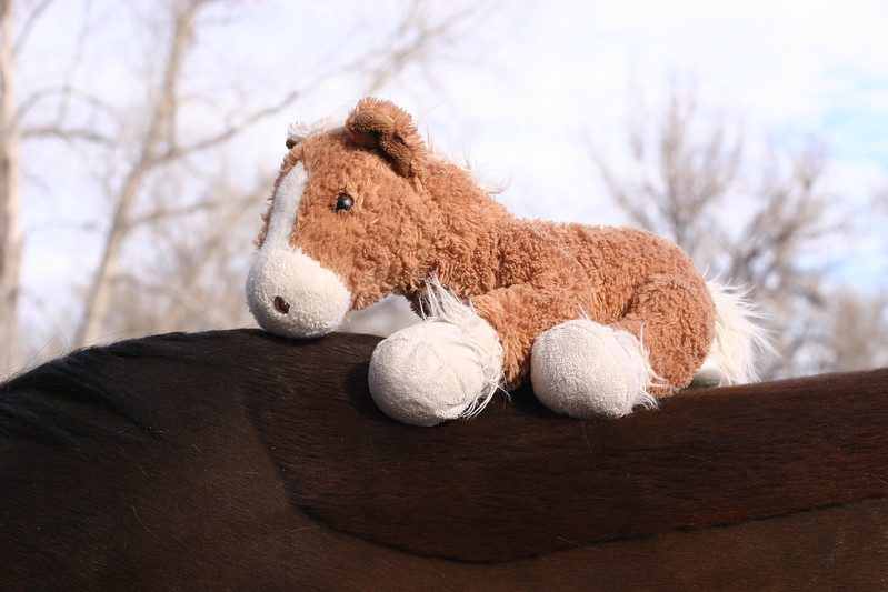Daddy pony