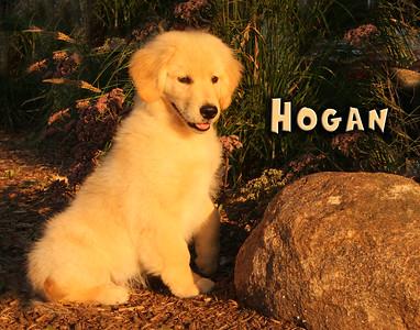 Hogan 8022