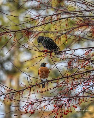 Starling & Robin 0580 CROP 8x10 LOGO