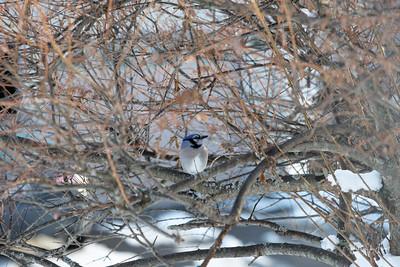 Blue Jay 9360 LOGO