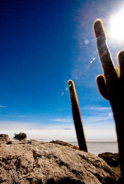 Isla del Pez, Bolivia, 2010.