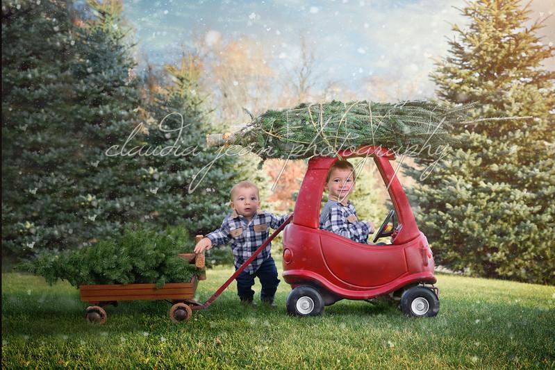Paulus christmas_tree_car 2
